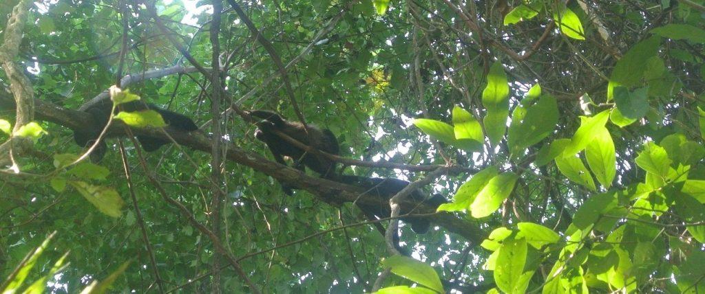 Cabo Blanco Natural Reserve, Montezuma, Costa Rica