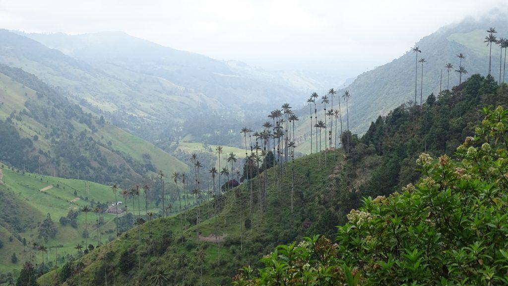 Waspalmen bij Valle de Cocora, Salento, Colombia