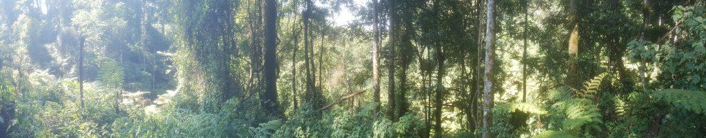 Bwindi Impenetrable Park, Uganda