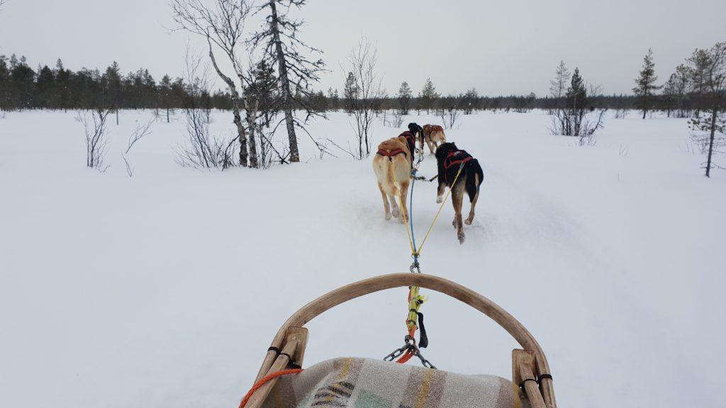 Huskysledetocht nabij Levi, Fins Lapland